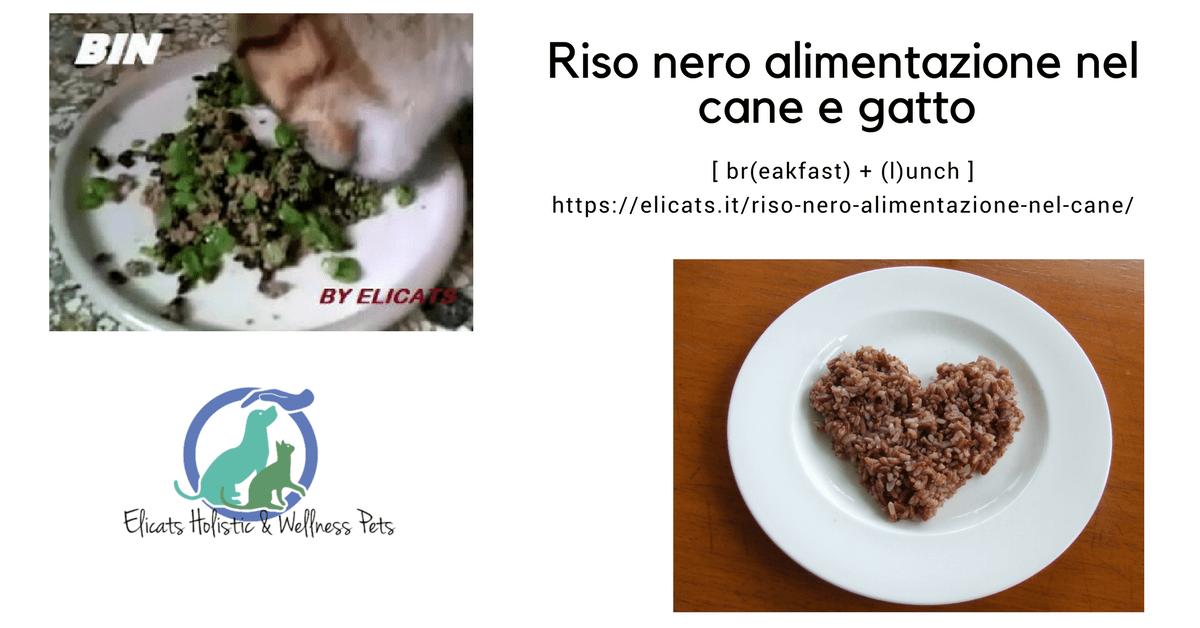 Riso nero alimentazione nel cane e gatto