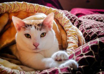 Laserterapia MLS cane gatto