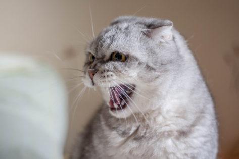 Nutrizione nel gatto ospedalizzato