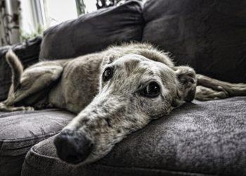 artrosi cane cura