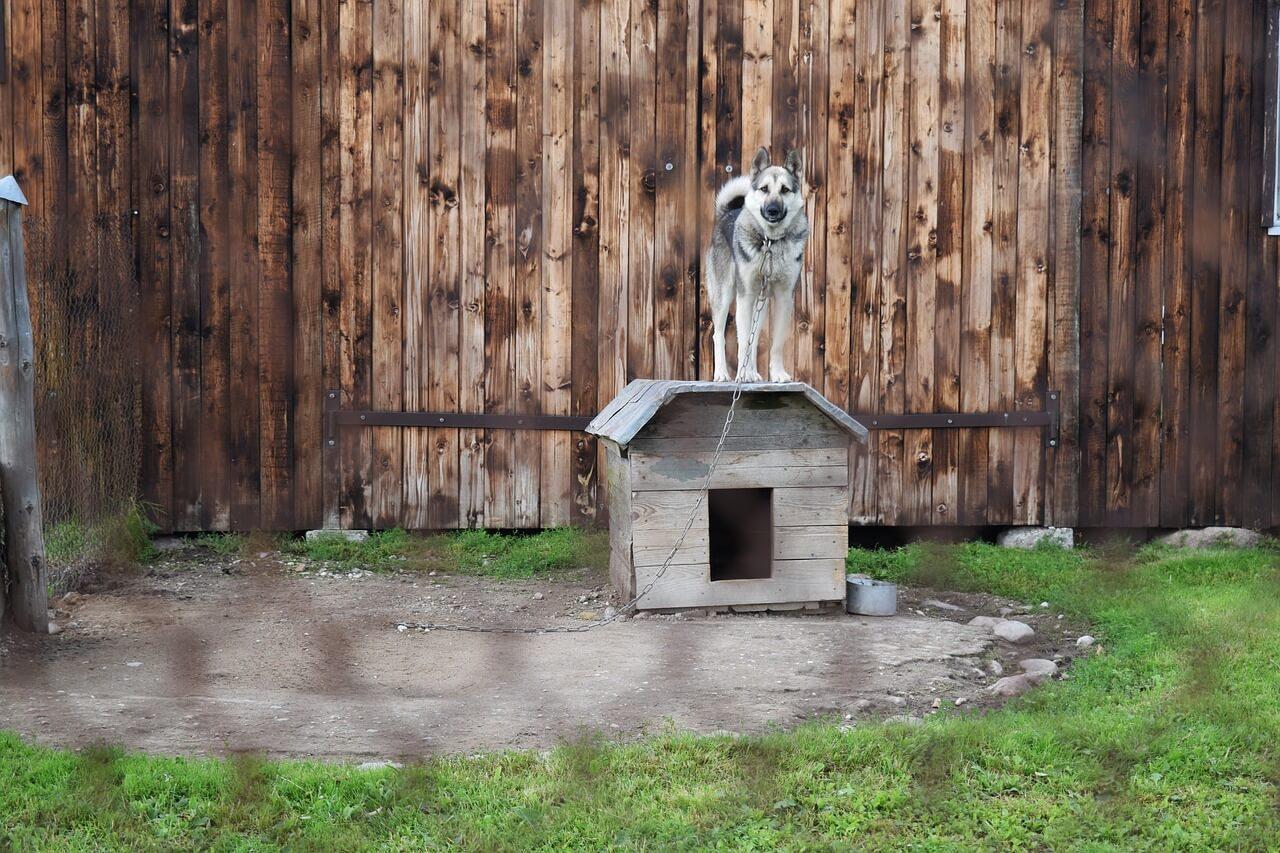 Tosse nel cane rimedi naturali