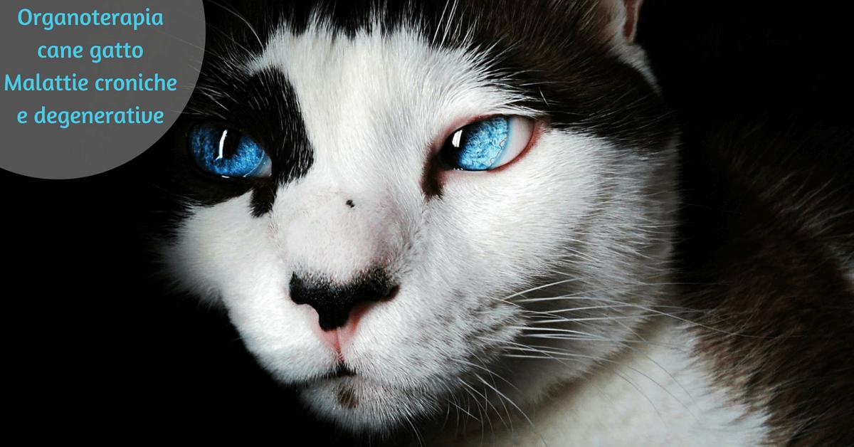 Organoterapia cane gatto