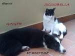 Elicats integratori immunostimolanti cane gatto for Antinfiammatorio cane