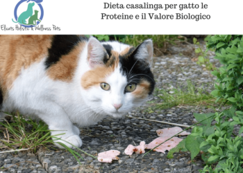 Dieta casalinga per gatto