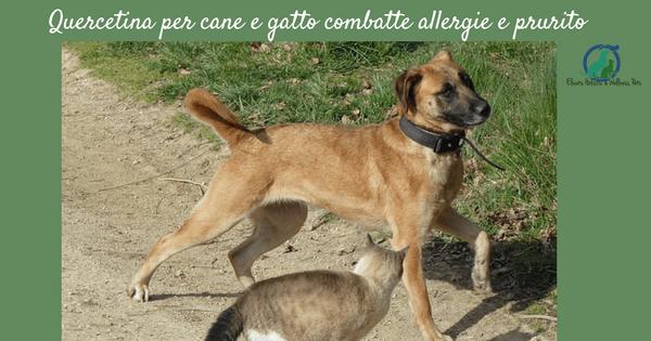 Quercetina cane gatto, Quercetina cane gatto contro allergie e prurito