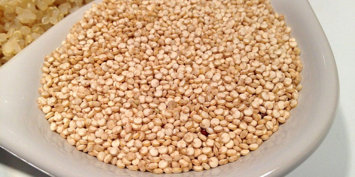 quinoa cane gatto