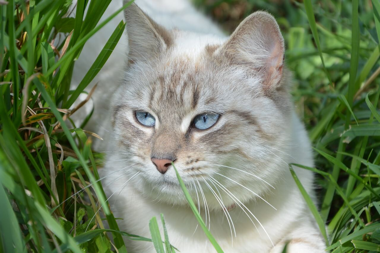 Olmo rosso Slippery Elm cane gatto