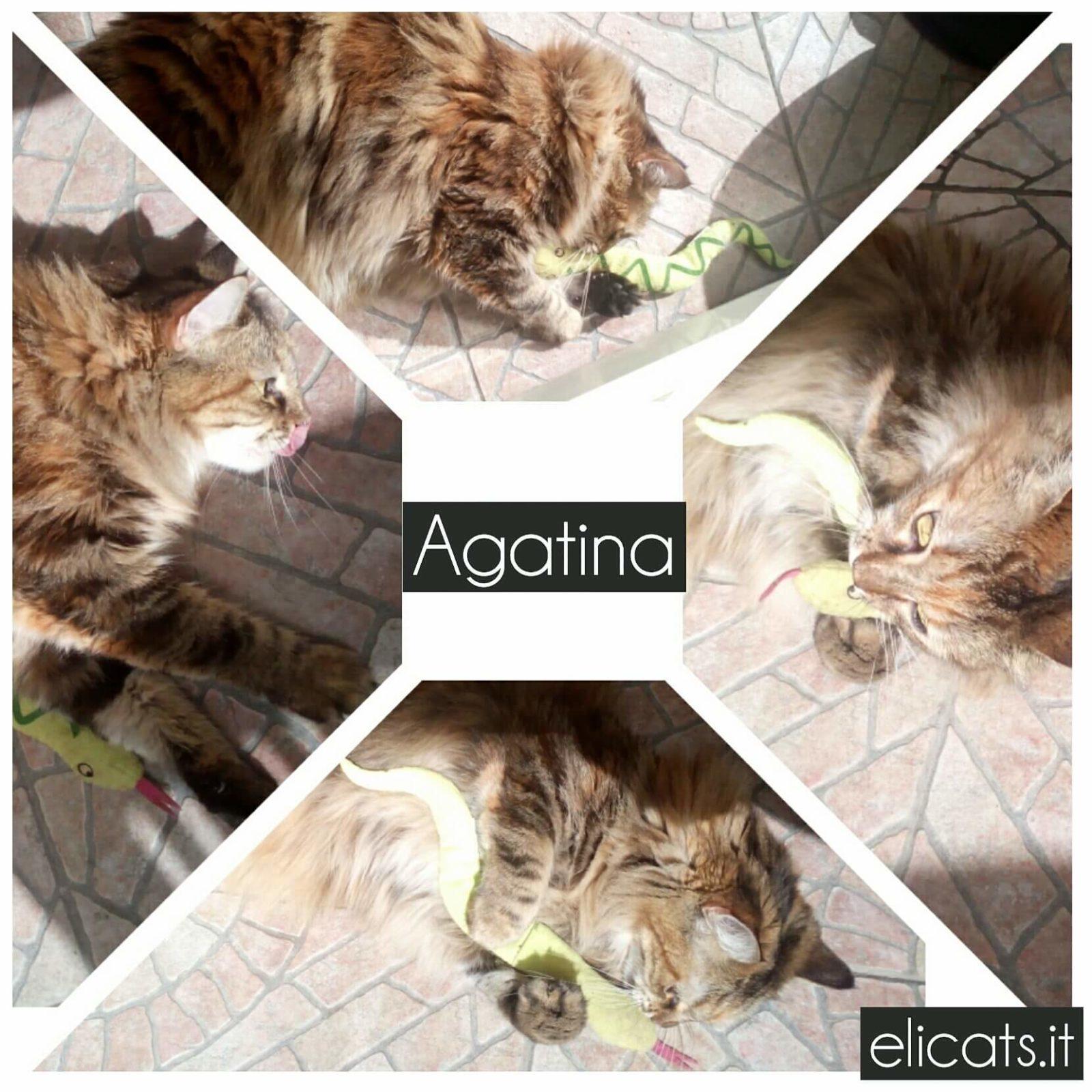 Integratori reni cane gatto elicats holistic pets for Urys gatto