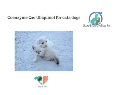 Coenzyme Q10, Coenzyme Q10 Ubiquinol for cats dogs