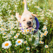 Natural alternatives to cortisone for cats and dogs