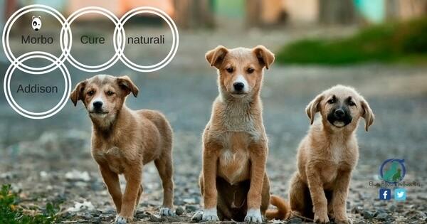 Addison cane, Addison cane cure naturali di supporto