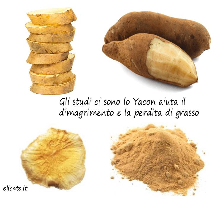 Yacon, Gli studi ci sono lo Yacon aiuta il dimagrimento e la perdita di grasso