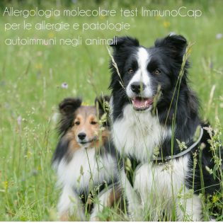 Allergologia molecolare test ImmunoCap per le Allergie e Patologie Autoimmuni negli animali