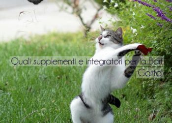 supplementi e integratori per la BARF