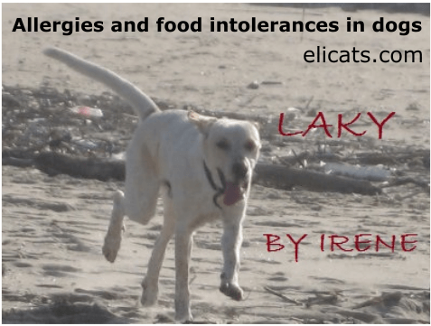 Allergies and food intolerances in dogs