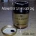 Astaxanthin anti-inflammatory anti-tumor cats dogs