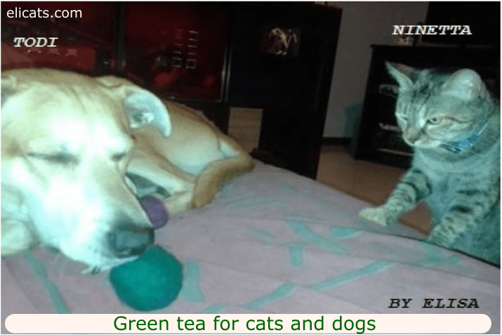 Green tea for cats and dogs