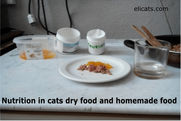 Nutrition in cats dry food and homemade food