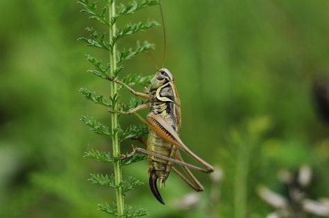 Pronti a mangiare insetti? petfood con farina di grilli