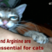 Taurine and Arginine are essential for cats