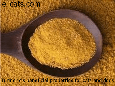 urmeric's beneficial properties for cats and dogs
