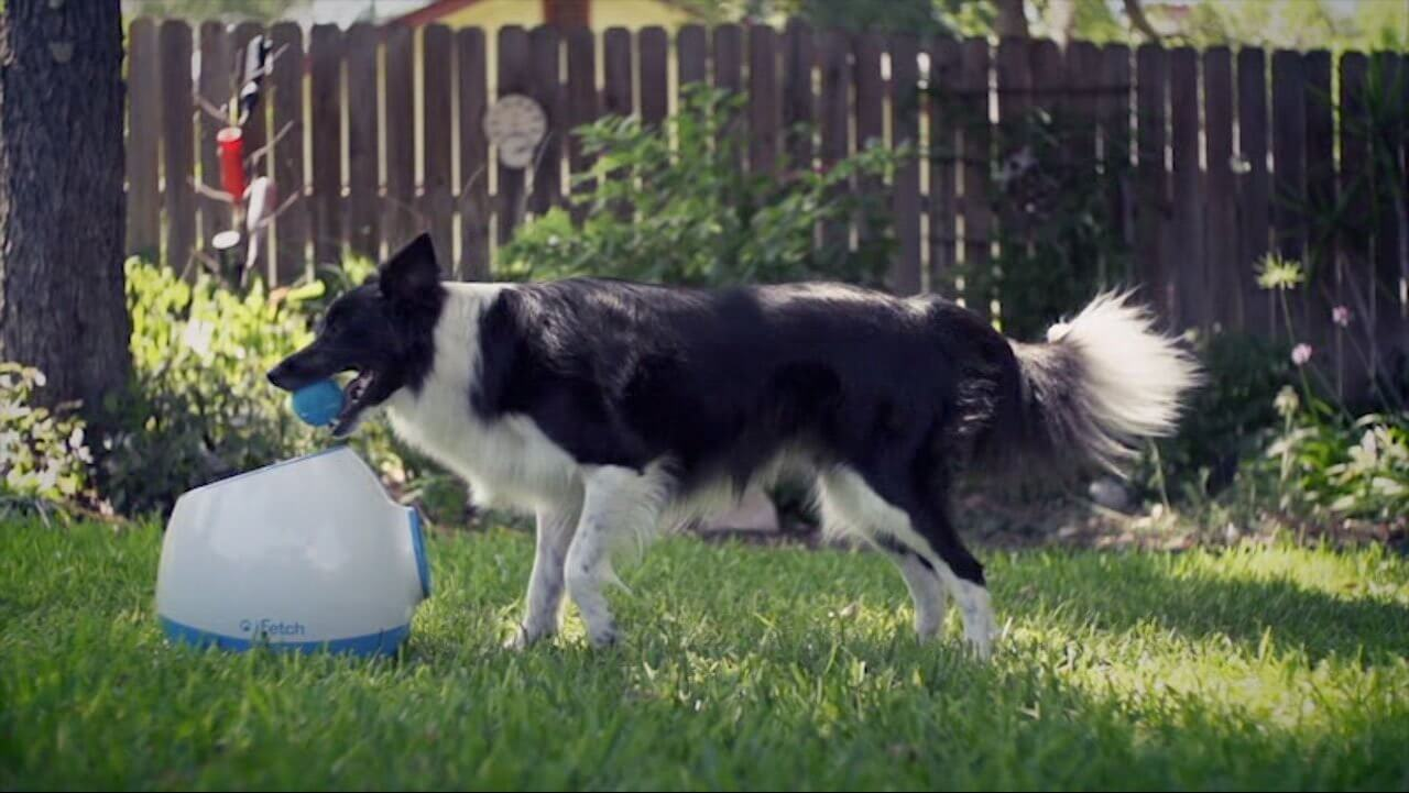 iFetch Automatic ball Launcher iFetch too Elicats.it