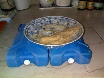 dieta umida per gatto