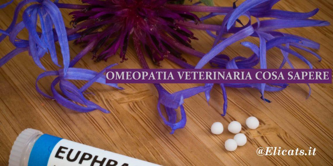 Omeopatia veterinaria gatto
