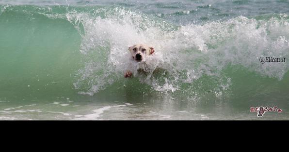 cane al mare, Cane al mare? protezione solare tende occhiali ciotole nella valigia di Fido