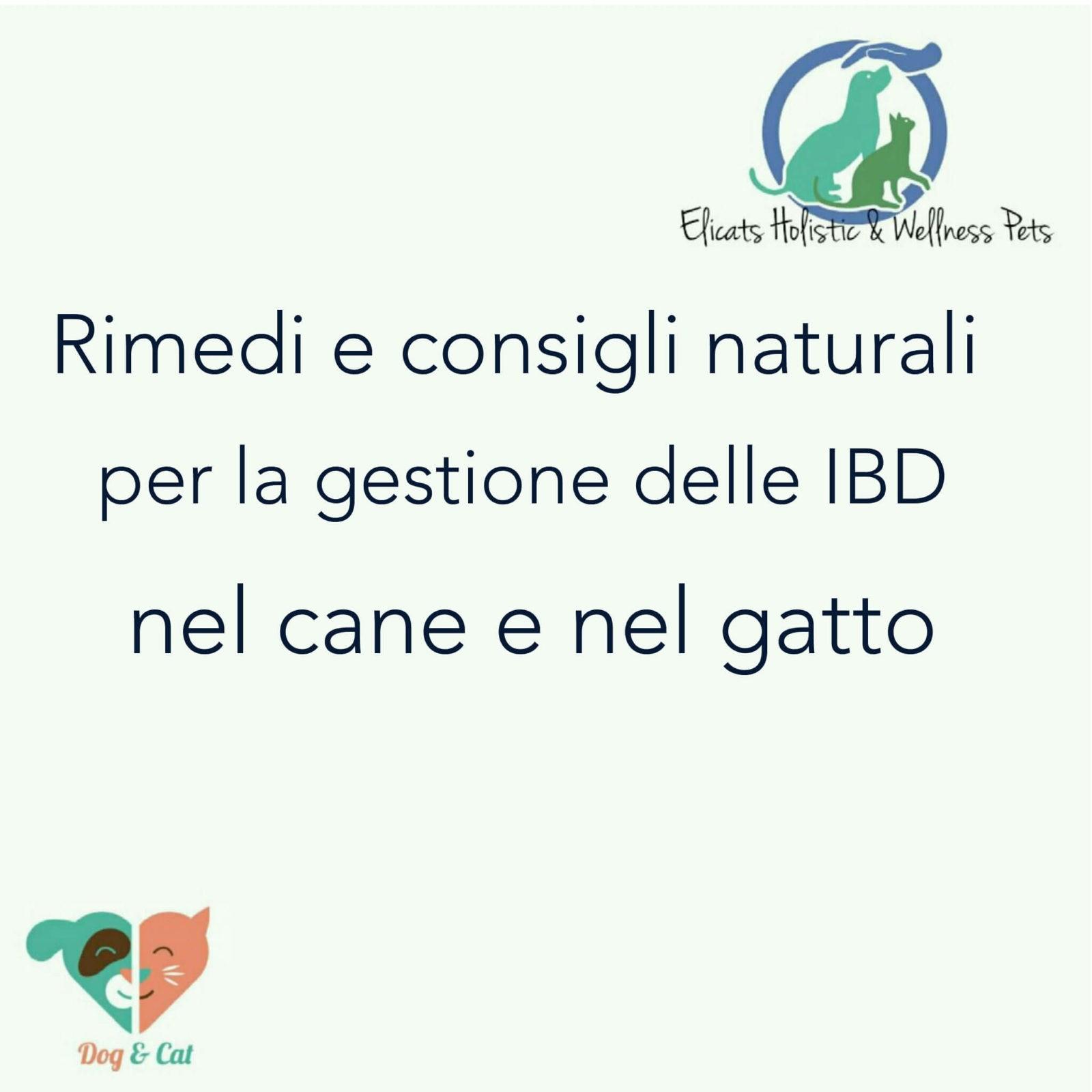 Rimedi naturali infiammazione intestinale gatto cane IBD, Rimedi naturali infiammazione intestinale gatto cane IBD