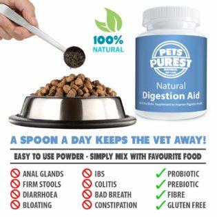 infiammazione intestinale IBD gatto cane cure naturali, Infiammazione intestinale IBD gatto cane Cure Naturali [Guida]
