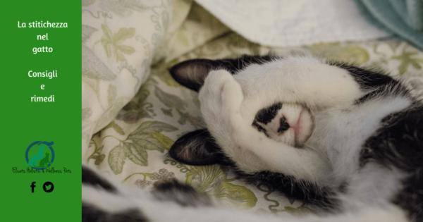 Stitichezza gatto, La stitichezza nel gatto gatto stitico cosa fare e come risolvere