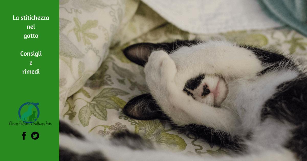 La Stitichezza Nel Gatto Gatto Stitico Cosa Fare E Come Risolvere