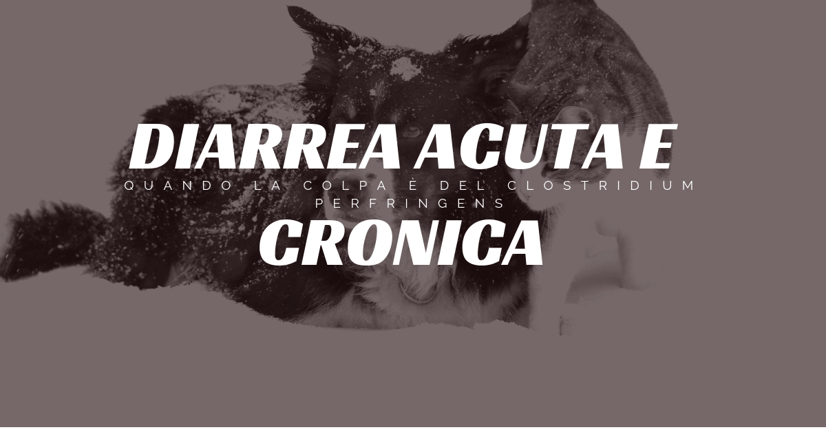 Diarrea cronica gatto cane
