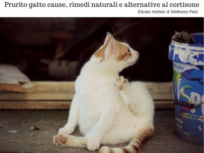 Gatto con prurito Come risolvere, Gatto con prurito Come risolvere trattamenti naturali