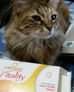 omega 3 omegor gatto cane
