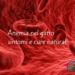 Anemia nel gatto