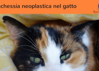 La cachessia neoplastica nel gatto