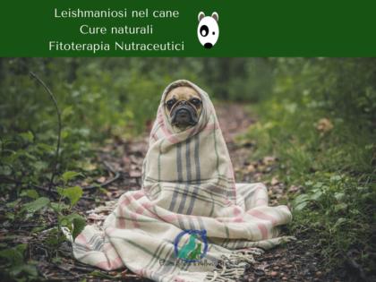 Leishmaniosi cane cura naturale, Leishmaniosi cane cure naturali con erbe omeopatia micoterapia