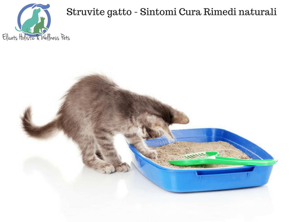 Struvite gatto