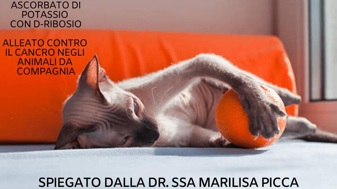 Ascorbato di potassio cane gatto