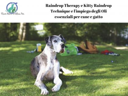 Raindrop Therapy, Raindrop Therapy Kitty Raindrop Technique con Gli O.E. cane gatto