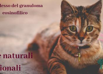 Granuloma eosinofilico felino