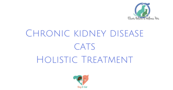 Chronic kidney disease cats, Chronic kidney disease cats Holistic Treatment