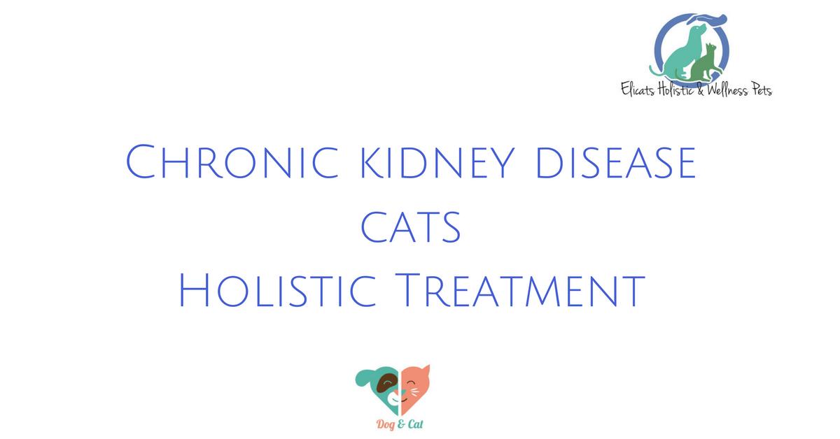 Chronic kidney disease cats