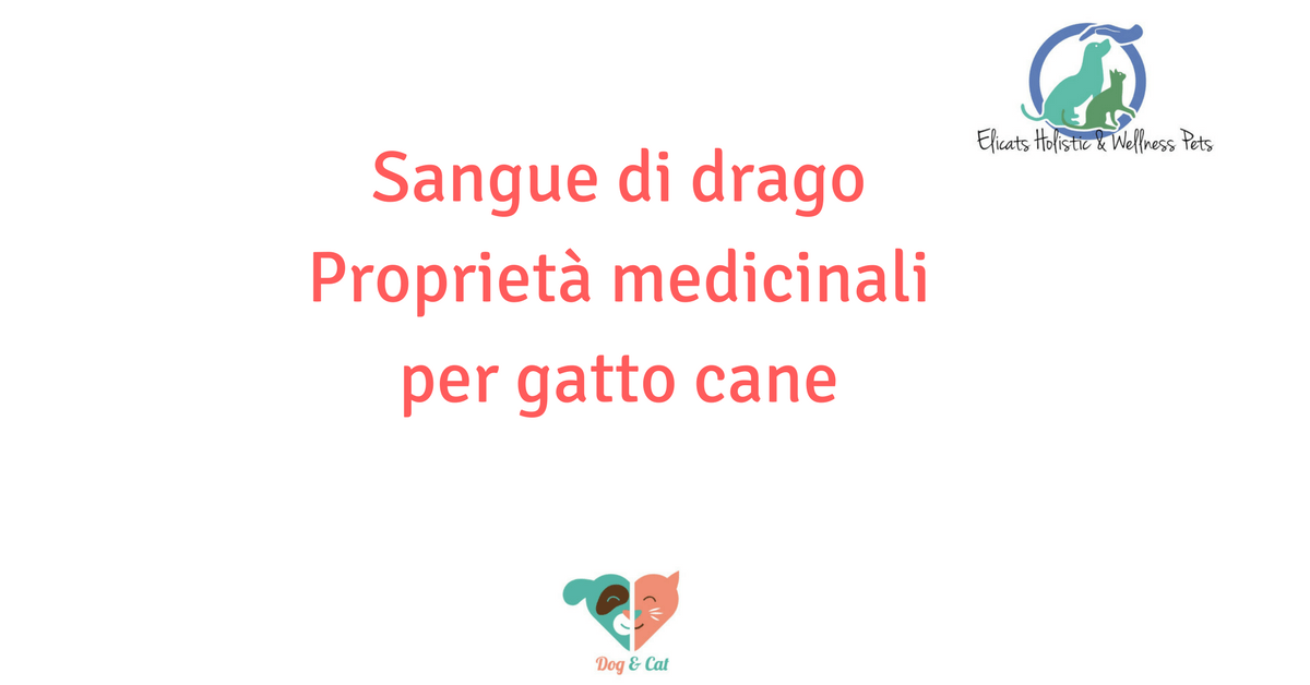 Sangue di drago cane gatto