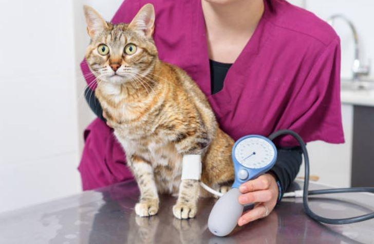 Ipertensione cane gatto rimedi Rimedi naturali Omeopatia..