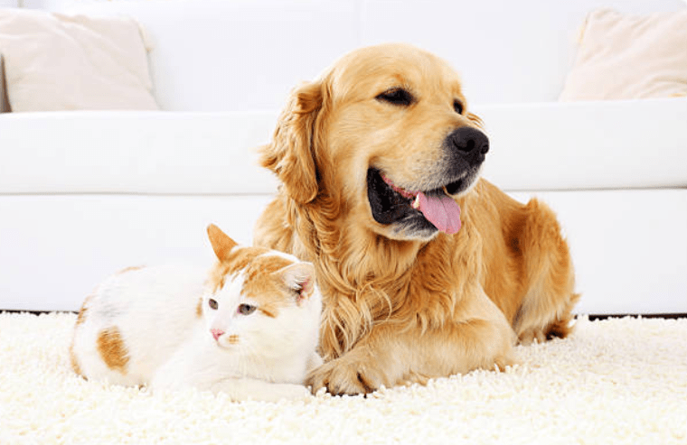 olio di copaiba cane gatto