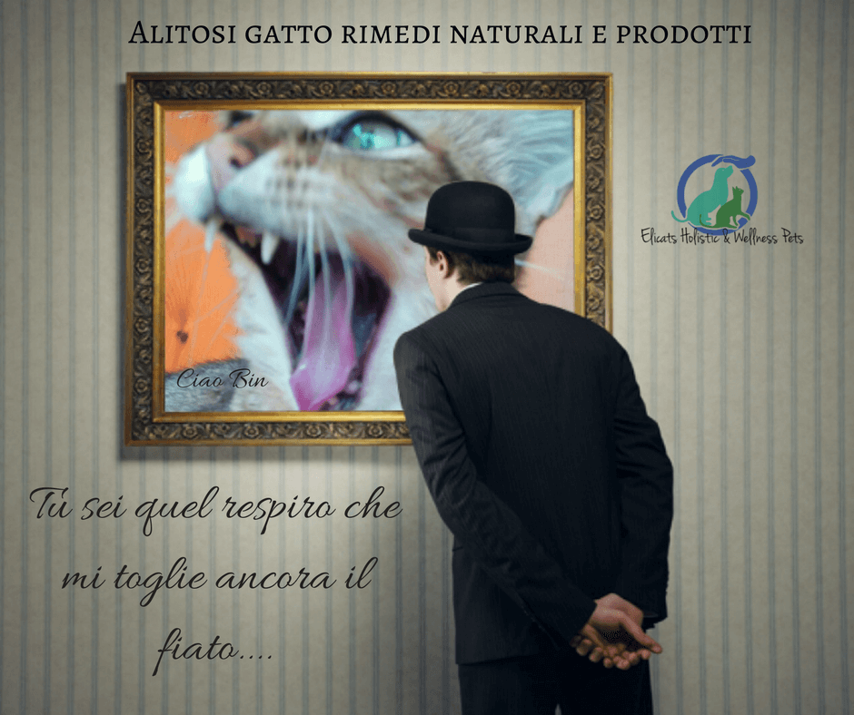 Alitosi Gatto