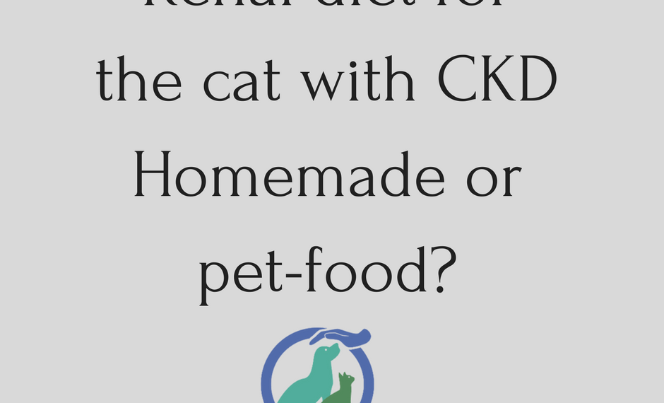 Renal diet for the cat